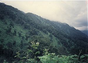 rwenzori ountains park hiking