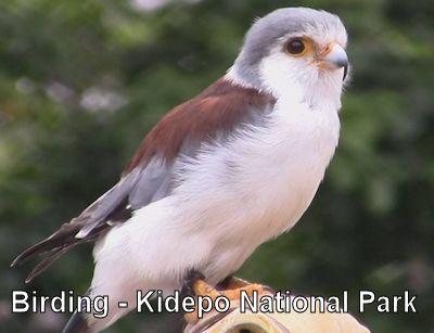 kidepo-birding-safari