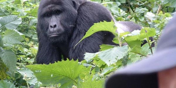 ugandaAdventures7